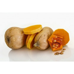 SQUASH - BUTTERNUT (Spain) 1kg