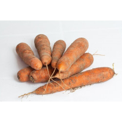CARROTS - HALF SACK (UK) 5kg