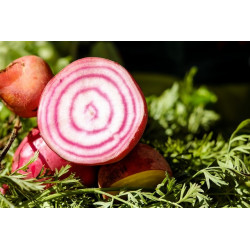 BEETROOT - RAINBOW BUNCHED (Farm)