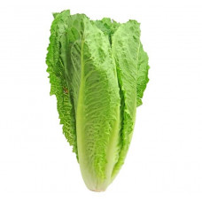 LETTUCE - ROMAINE (UK)