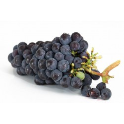 BLACK MAGIC GRAPES (Italy) 350g
