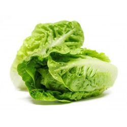 LETTUCE - FLAT LEAF (UK)