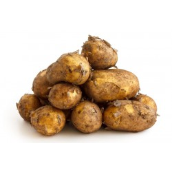 POTATOES - NEW (UK) 650g