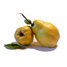 QUINCE (Spain) 500g