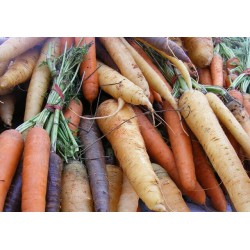 CARROTS - MIXED (UK) 1kg