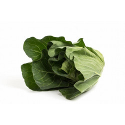 CABBAGE - SPRING GREENS (UK)