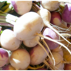 BUNCHED TURNIPS (UK)
