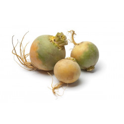 TURNIPS (UK) 500g