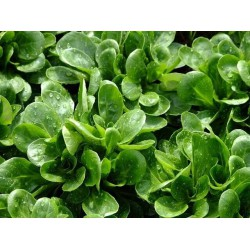 WATERCRESS (France)