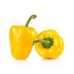 PEPPER - YELLOW (Spain) x 2