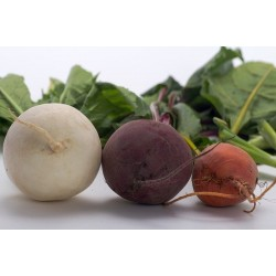 BEETROOT - WHITE (UK) 1kg